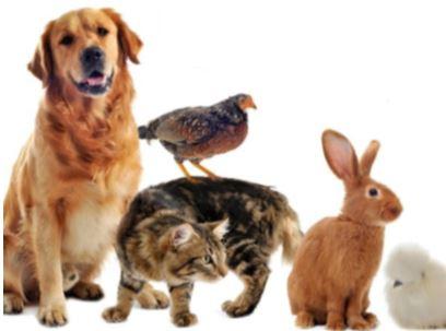 Pets' Service at Melbury Abbas