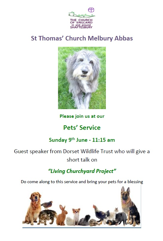 Melbury Abbas Pet Service – 9th June